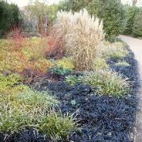 Winter Garden Jobs - the plantadvice gardening podcast plantadvice co uk