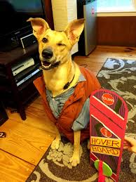 Marty Mcfly Halloween Costume Irti Funny Picture 8116 Tags Future Dog Costume