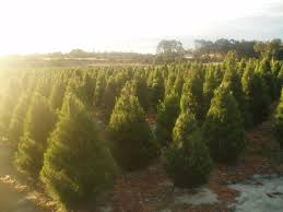 valley christmas tree plantation rainforest islands ferry