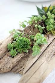 Succulent Planter Mini Driftwood Faux Succulent Planters