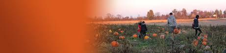 dull u0027s tree farm u0026 pumpkin patch in thorntown indiana