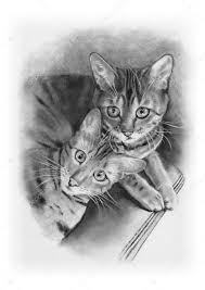imagenes a lapiz de gatos los gatos de bengala dibujo a lápiz realismo foto de stock