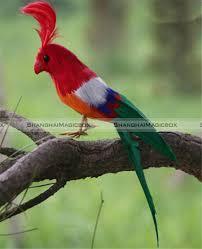 bird taxidermy promotion shop for promotional bird taxidermy on