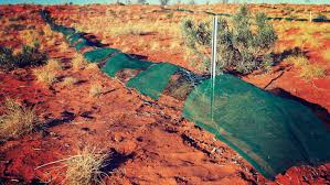 australian native desert plants protecting desert animals 20 06 2017 behind the news