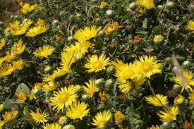 native plants northern california growing native plants in california this is the resource you need