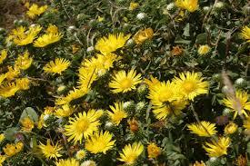 northern california native plants growing native plants in california this is the resource you need