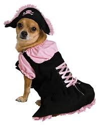 Halloween Costumes Small Dogs 54 Rennie Pets Images Animals Pet Costumes