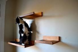 Wall Shelves For Cats Stylish Cat Shelves Modern Cat Magazine