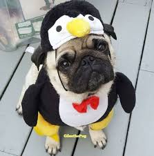 Ghost Dog Halloween Costumes 25 Pug Costume Ideas Pug Halloween