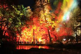 Wildfire Edinburgh Book by Best 25 Enchanted Forest Pitlochry Ideas On Pinterest Enchanted