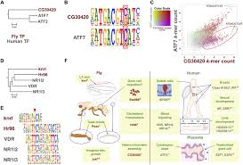 Home Evolutionary Healthcare Conservation Of Transcription Factor Binding Specificities Across
