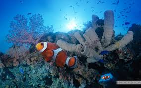 Most Beautiful Colors by The Most Beautiful And Colorful Aquatic Sea Creatures Life