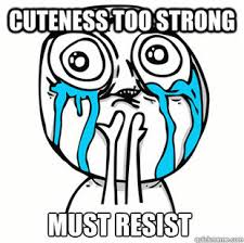 So Cute Meme - chubby puppies that look like teddy bears cute pic overload
