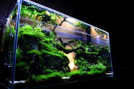 Tank Aquascape Modern Aquarium Design With Aquascape Style For New Interior