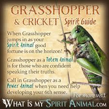cricket u0026 grasshopper symbolism u0026 meaning spirit totem u0026 power