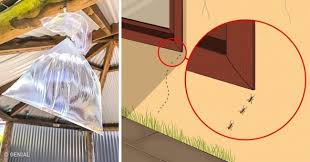 diez cosas para evitar en alco armarios 10 maneras de evitar cualquier plaga o insecto en tu casa