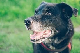 dog euthanasia dog euthanasia pets happy hour