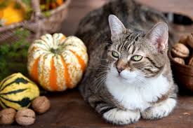 cat safety tips thanksgiving safety tips for cats