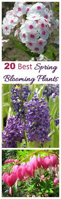 blooming plants spring blooming plants my 20 top picks for early spring flowers