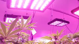 Led Grow Lights Cannabis News U2013 Page 4 U2013 Cirrus Led Grow Lights