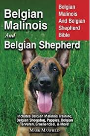 belgian malinois competition belgian malinois comprehensive owner u0027s guide robert pollet dr