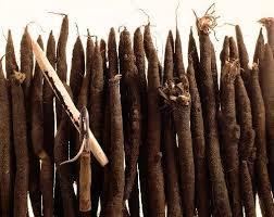 comment cuisiner les salsifis en attendant les asperges comment cuisiner les salsifis stéphane