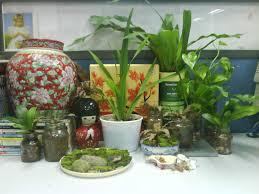 100 best plants for office desk best 25 office cubicles