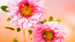 hd images of flowers flowers wallpapers page 12 hd wallpapers