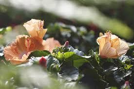 annuals tropicals houseplants hoen u0027s garden center u0026 landscaping