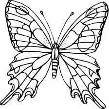 butterfly drawing black and white drawing clipart black and white