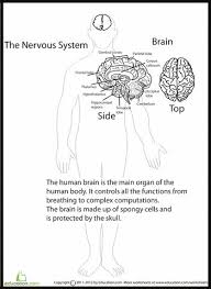 56 best education images on pinterest human anatomy science