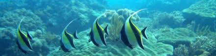 diving zanzibar dive in zanzibar scuba diving zanzibar