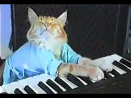 Cat Playing Piano Meme - charlie schmidt s keyboard cat the original youtube