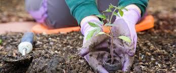 how to start a home vegetable garden benefits u0026 saving money