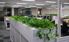 plants for office indoor plants office plants archives lime garden