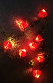 string lights physalis flowers fairy lights wedding