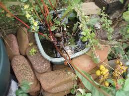 Wildlife Garden Ideas Building A Basin Pond Simple Wildlife Ideas For Householders