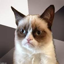 Meme Generator Grumpy Cat - musically malicious grumpy cat blank template imgflip