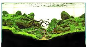 Aquascape Layout Your Tanks Ryan Thang To U2014 Practical Fishkeeping Magazine
