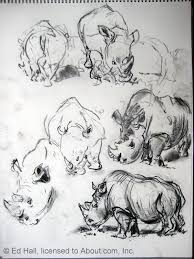 sketching animals at the zoo and beyond