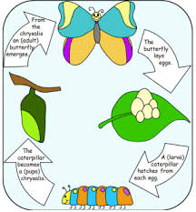 frog and butterfly life cycles prek k printable pack meet penny