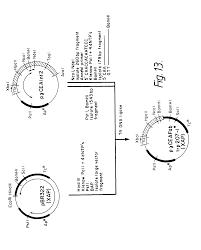 patent us7923221 methods of making antibody heavy and light