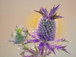 lady bird johnson wildflower center texas u0027 botanic garden