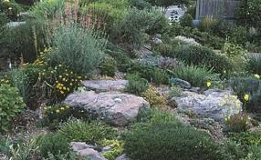 Rock Garden Plants Uk Plants For A Rock Garden Rock Garden Plants Ideas For Our Rock