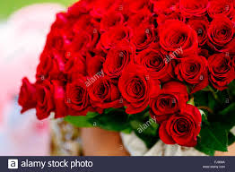 big bouquet of roses big bouquet with lot of roses stock photo 97115910 alamy