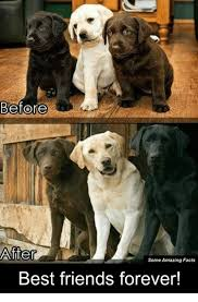 Friends Forever Meme - before after some amazing facts best friends forever meme on me me