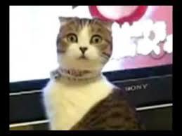 Wtf Boom Meme - wtf cat boom youtube