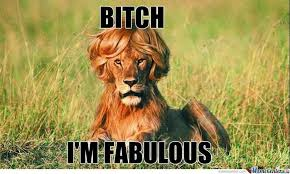 Bitch Im Fabulous Meme - 37 most funniest lion meme you never seen in your life picsmine