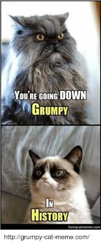 Grumpy Cat Meme Images - you re going down grumpy history funny catmemescom httpgrumpy cat