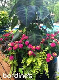 Plant Combination Ideas For Container Gardens - 2275 best containers images on pinterest flowers plants and